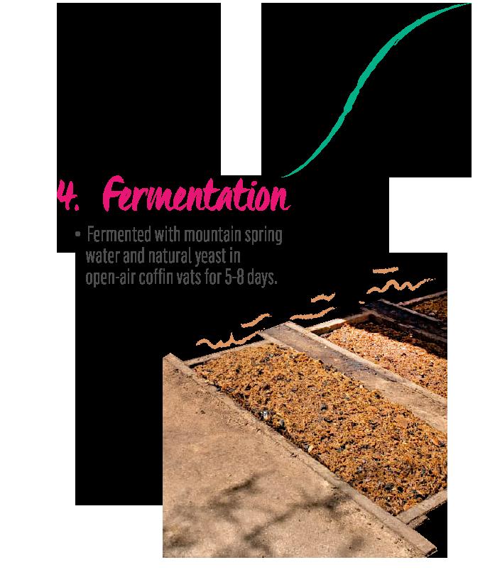 http://mezcalburrito.com/wp-content/uploads/2020/05/BurritoFiestero_Process_Fermentation.png