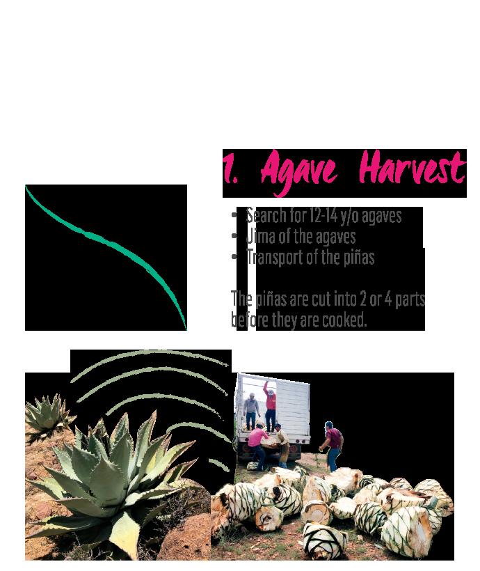 http://mezcalburrito.com/wp-content/uploads/2020/05/BurritoFiestero_Process_Harvest-1.png