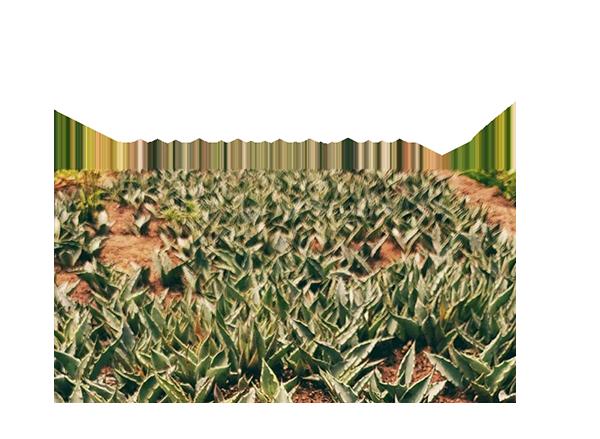 https://mezcalburrito.com/wp-content/uploads/2020/05/BurritoFiestero_sustainability.png