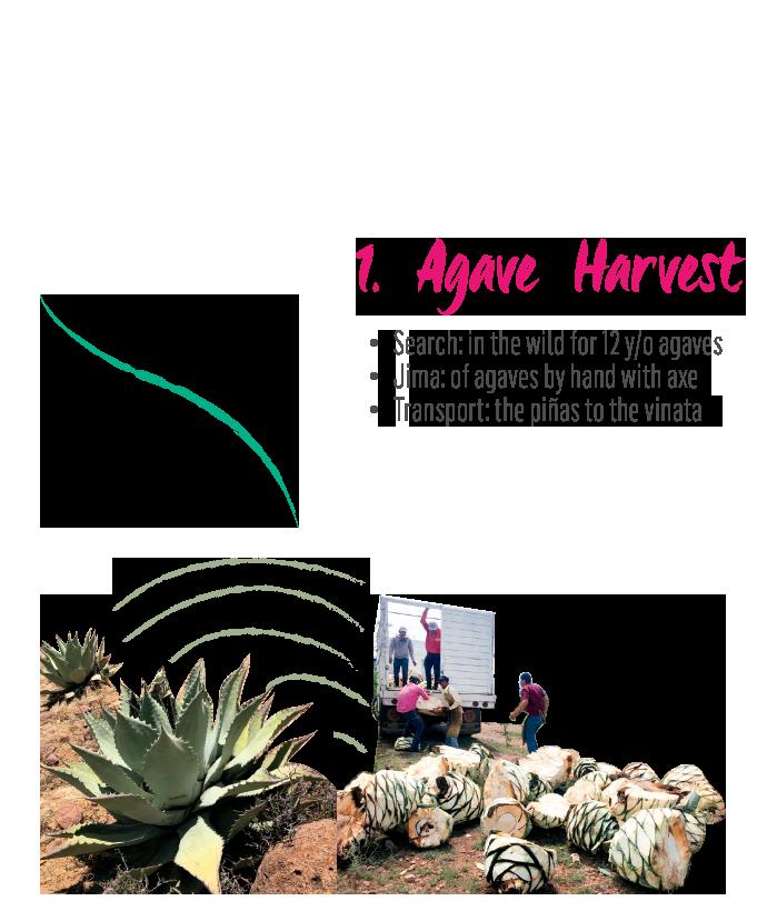 https://mezcalburrito.com/wp-content/uploads/2021/02/MezcalBurrito_Process_Begin_Harvest.png