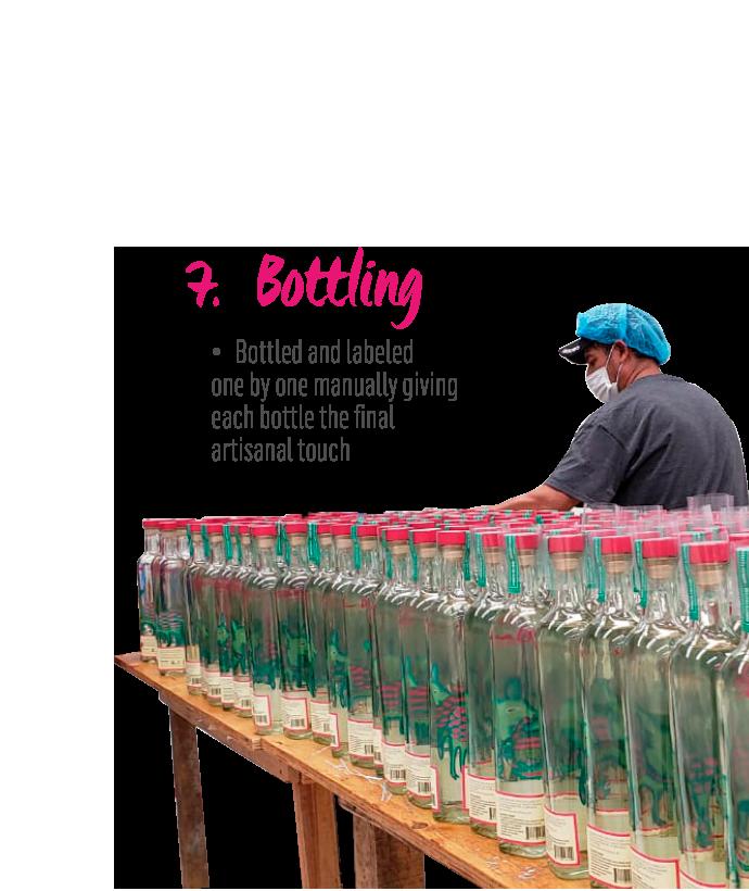 https://mezcalburrito.com/wp-content/uploads/2021/02/MezcalBurrito_Process_Bottling.png